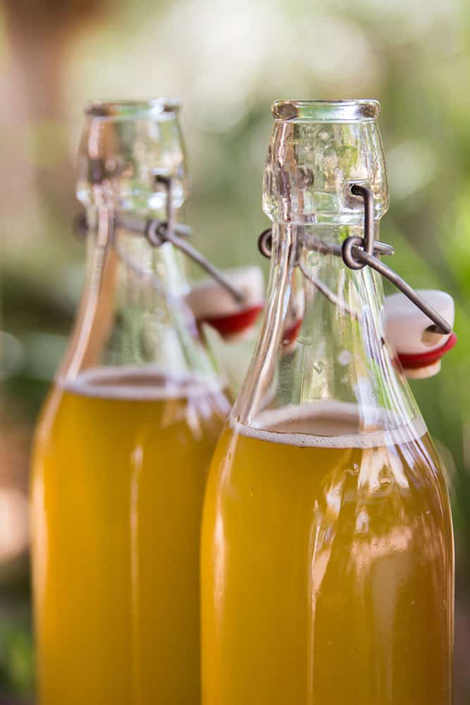 Homemade Bottled Kombucha Green Tea