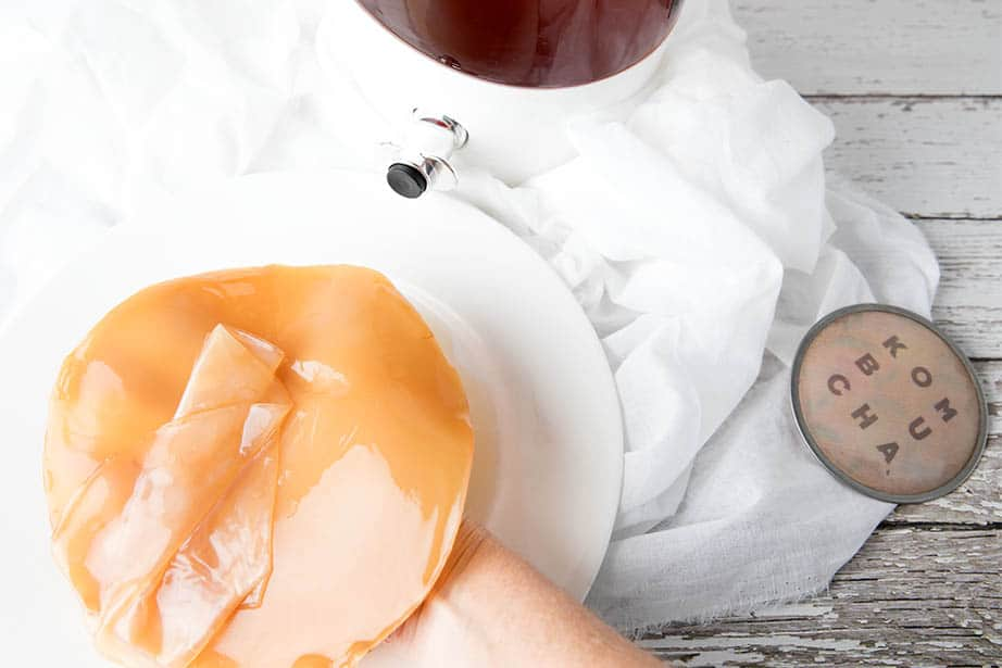 Images of a SCOBY being removed because fruit lies in Kombucha